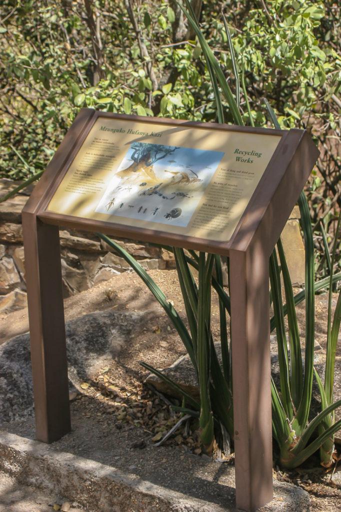 Serengetti Visitor Center - 053