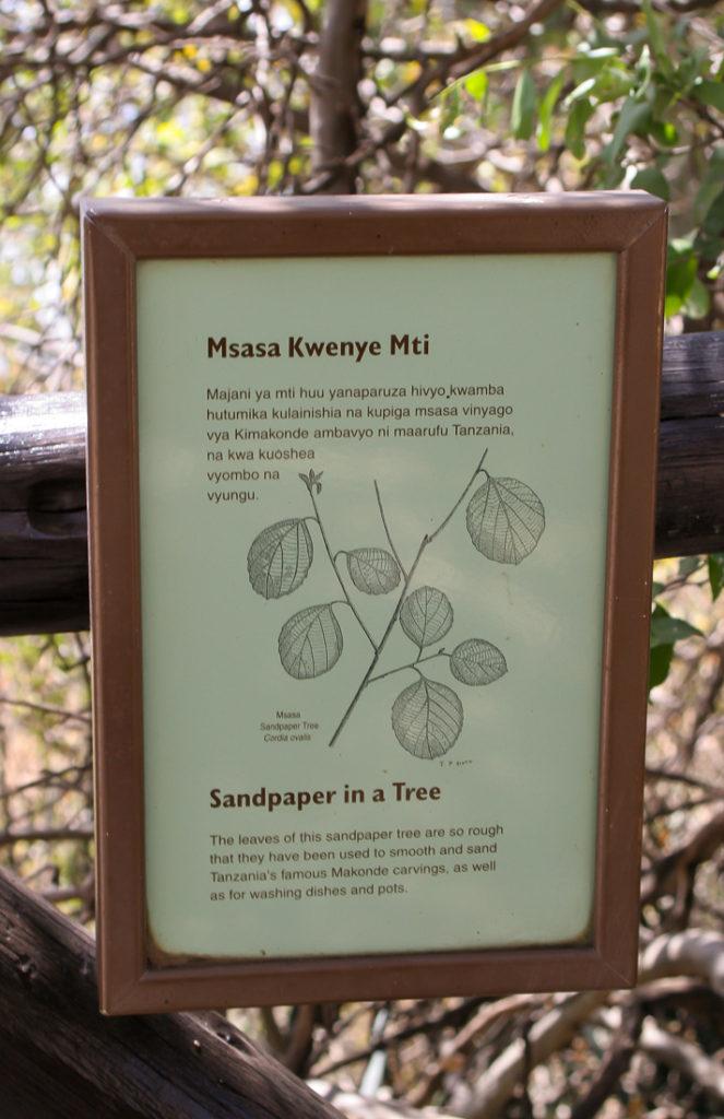 Serengetti Visitor Center - 058