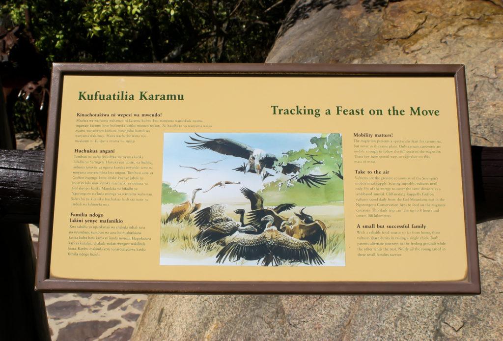 Serengetti Visitor Center - 105