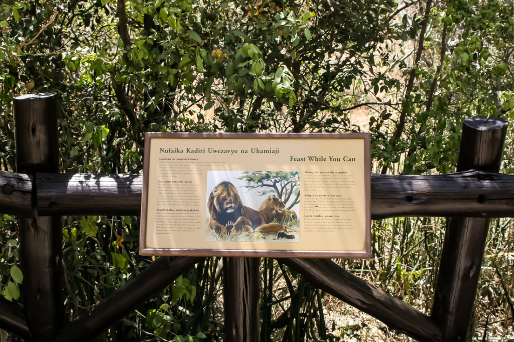 Serengetti Visitor Center - 106