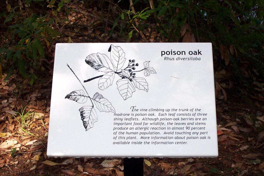 poison oak-Redwood NPS copy 2
